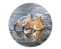 Vlinder Ring - handgemaakte zilveren Gouden Ring - giftenideeën - ringen voor haar - de giften van de verjaardag - gouden ringen - vlinders - unieke ringen - Jewel