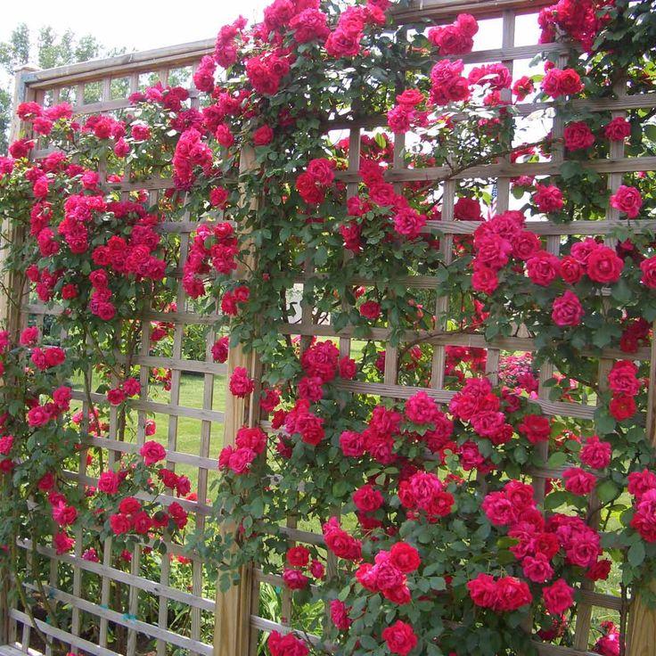 14 Inspiring Diy Flower Walls Rose Garden Design Flower 400 x 300