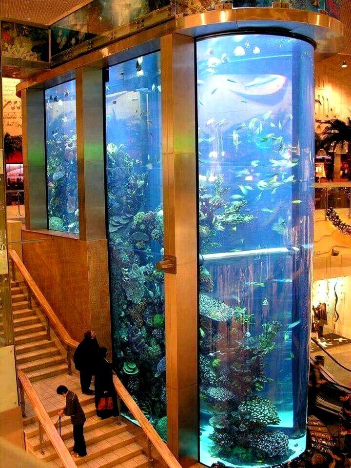 11 Great Fishrooms To Inspire You Aquarium Fish Store Aquarium Fish Aquarium Fish Tank