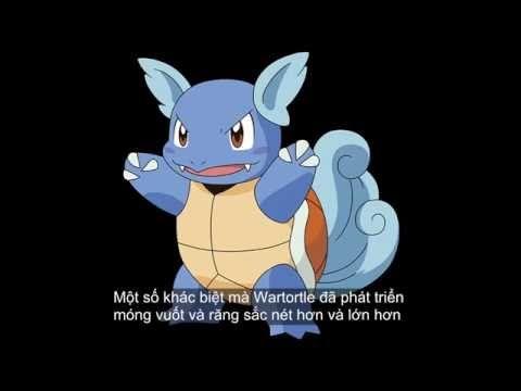 Wartortle- Pokémon Rùa - Pokemon Go Gameplay #08