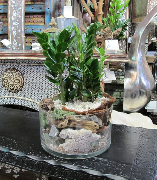 Easy ZZ Plant - The easiest plant to grow - Zamioculcas Zamiifolia - Easy Low Light & 12 best ZZ Plants + Lucky Bamboo images on Pinterest | Landscape ... azcodes.com