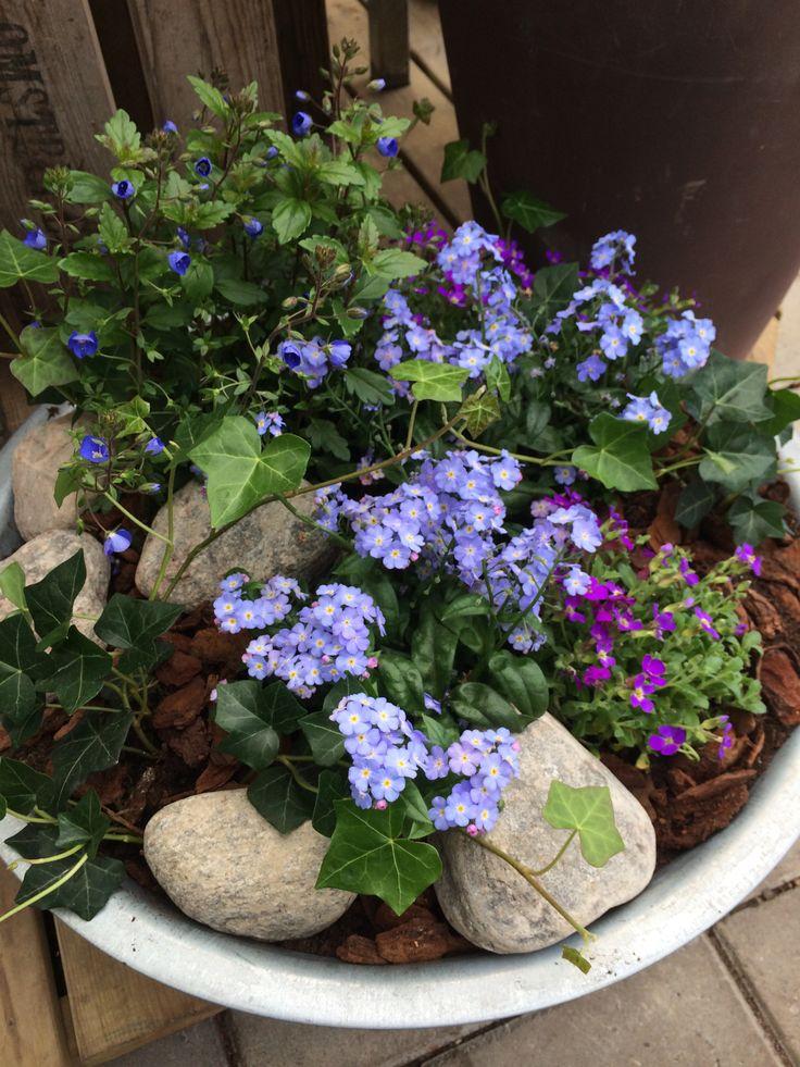 Härlig plantering i blått http://www.blomsterlandet.se/Tips-och-artiklar/Tips-och-artiklar/Tradgard/Sommarplantor/Varkruka-Plantera-Sa-Har/