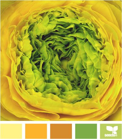 Colour InspirationColor Palettes, Kitchens Colors, Fruit Colors Palettes Yellow, Design Seeds, Bright Fruit Colours, Ranunculus Bright, Kitchens Colours, Bright Green Colors Schemes, Colors Inspiration