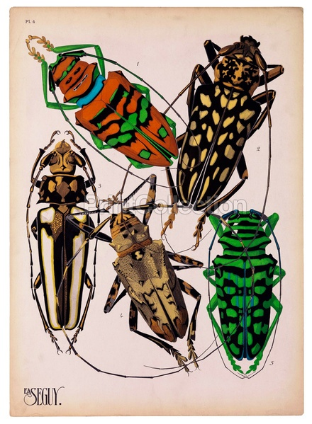 E.A.åÊSeguyåÊan artist, designer and etymologiståÊwas very prolific in the early part of the last century in France. This is part of a larger set of about 16 groups of Insects. Plate 4 shown here.