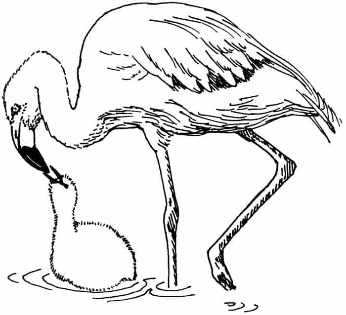 Baby Flamingo Coloring Pages In 2020 Flamingo Coloring Page Animal Coloring Pages Zoo Animal Coloring Pages
