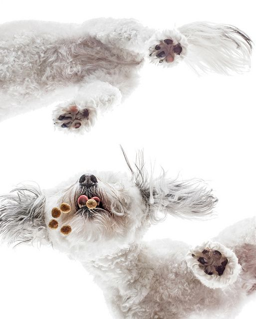 Plexiglas Pet Photography by FauxTaux Grafix, via Flickr