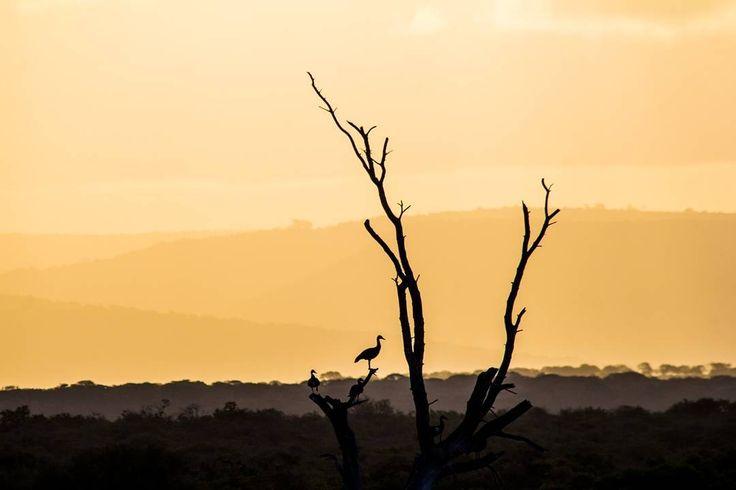 Ensumo Pan sunset #mkhuze #umkhuze #mkhuzegamereserve #umkhuzegamereserve #ensumopan #sunset #kzn #southafricaza #instagramza #instagramsa #pixel_panda #loves_southafrica #travelbug #travel_photography #wildlifephoto #naturephotography #canonphotography #canon #aboutsouthafrica #travelsouthafrica #photosa #photographer #photo #photography #homeawayfromhome #lovemkhuze