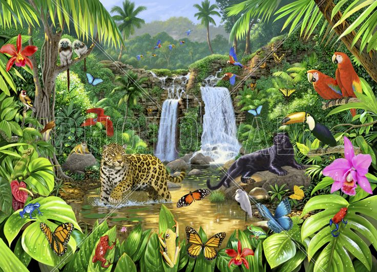 Rainforest Harmony - Fototapeter & Tapeter - Photowall