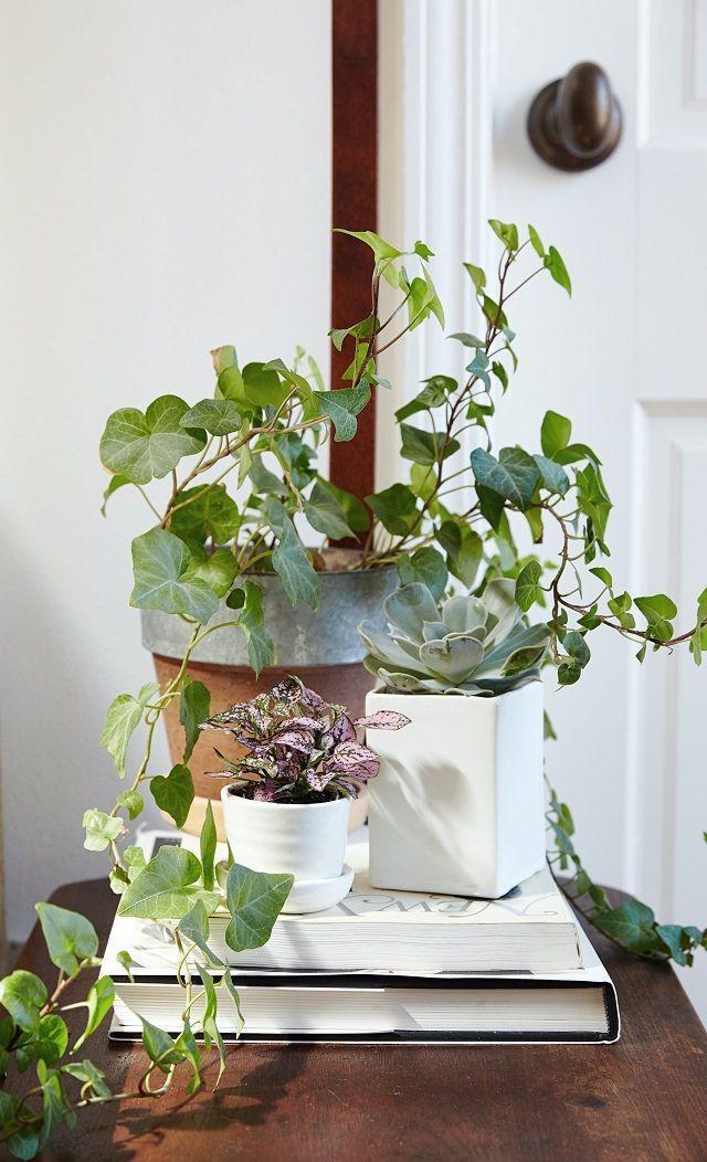 best 25 ivy plants ideas on pinterest indoor ivy. Black Bedroom Furniture Sets. Home Design Ideas
