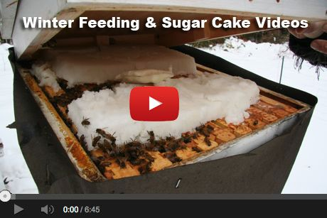 Getting your honeybees through winter is a challenge. We feed our bees sugar in…