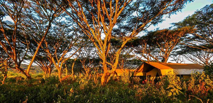 Tansania, Ngorongoro Krater – Stellt euch vor: Honeymoon unter dem Sternenhimmel von Tansania umgeben von den Lauten der Wildnis. Geheimtipp:  Lemala Ngorongoro Tented