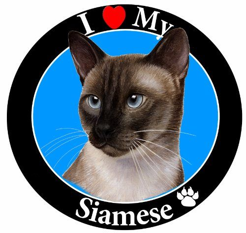E  S Pets Car Magnet Siamese * See this great product.(This is an Amazon affiliate link and I receive a commission for the sales)