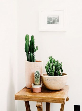 Potted Cactus In Handmade Ceramic Planters