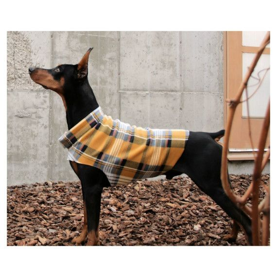 Big Dog Sweater Yellow Plaid Doberman Boxer Lab by hoverfly. Wish I could find this.