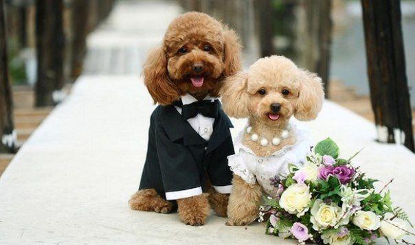 Жительница Британии устраивает эксклюзивные свадьбы домашним животным.......