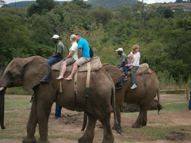 Experience an Elephant Ride.
