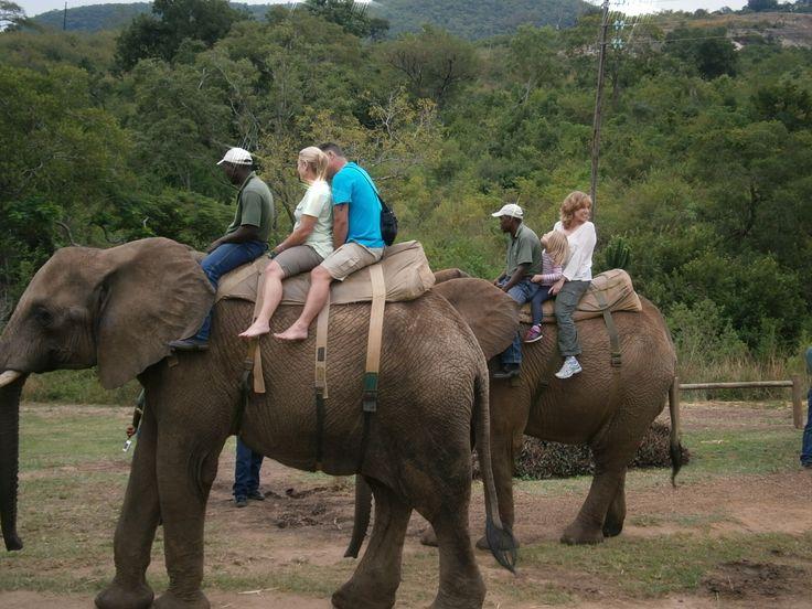 Experience an Elephant Ride.