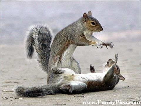 Best Squirrels Images On Pinterest Squirrels Adorable - Squirrel photographed in heroic pose becomes star of hilarious photoshop battle