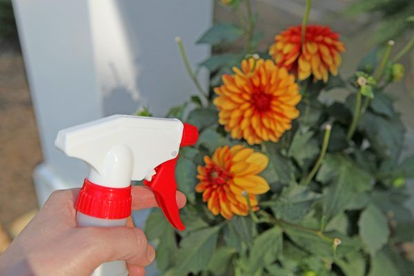 How to Make Cayenne Pepper Spray Repellent (with Pictures)