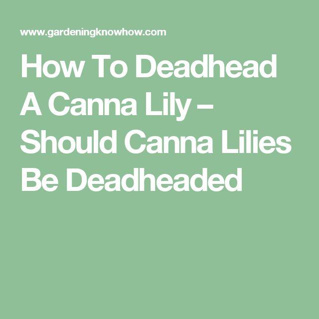 How To Deadhead A Canna Lily – Should Canna Lilies Be Deadheaded