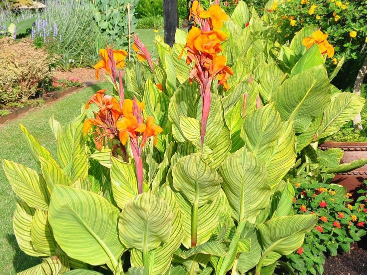 Want perennials that like sun bathing? Grow these high-powered beauties for fun…