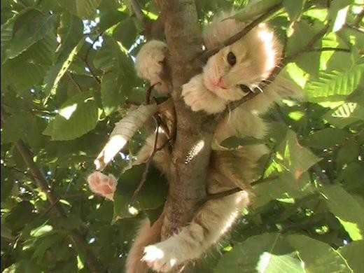Gizmo in the tree