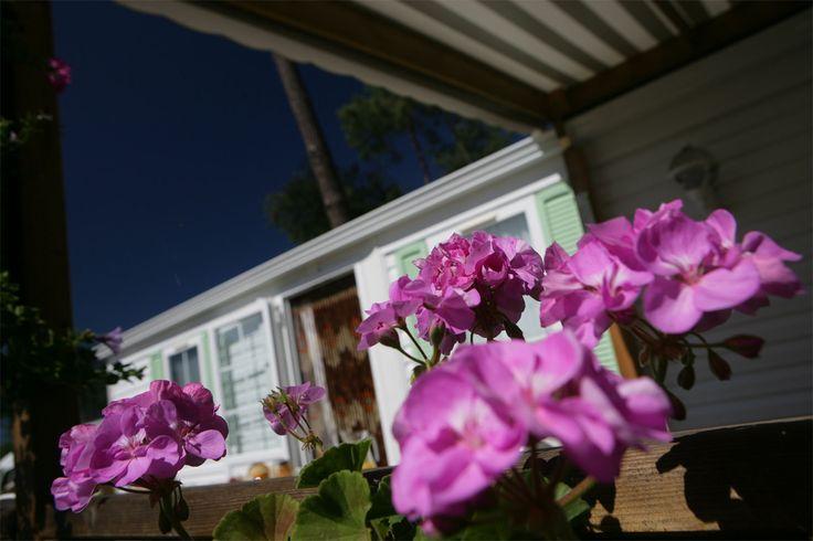 La fleur & mobil homes http://www.camping-lapignade.com/