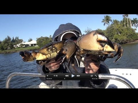 19 Best Images About Crabbing On Pinterest How To Cook