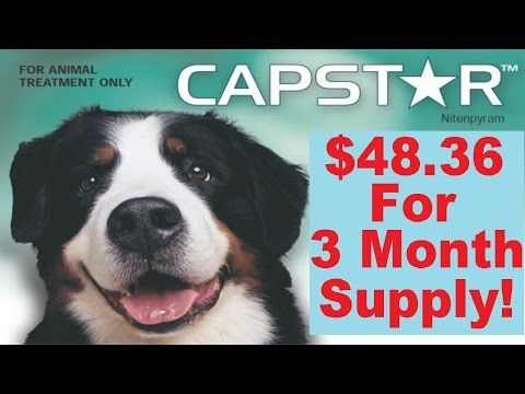 Buy Now at http://bit.ly/CapstarForDogs Where To Buy Capstar (Nitenpyram) For Dogs Online Cheap Without a Prescription or VetHaving a dog with fleas is a real downer for the whole family. Not only is your poor beloved pet all itchy and scratchy, but you and your children are at risk of being bitten, and even possibly contracting a disease. If your dog has fleas, you need to do something about it, and you need to do it as soon as possible.There are many dogs and cats that are allergic to…