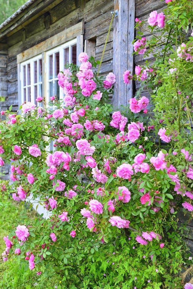 les 98 meilleures images propos de jardin et roses d. Black Bedroom Furniture Sets. Home Design Ideas