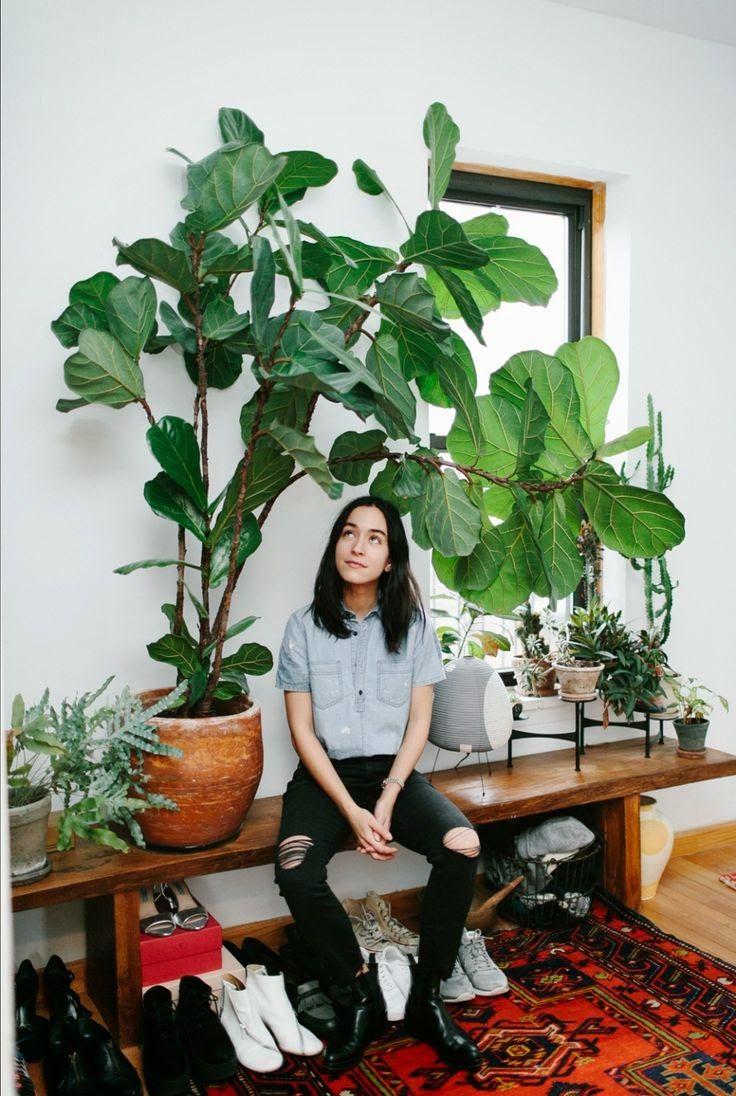 25 best ideas about plantes d 39 int rieur sur pinterest d cor de plantes plantes d 39 int rieur - Plantes fleuries d interieur ...