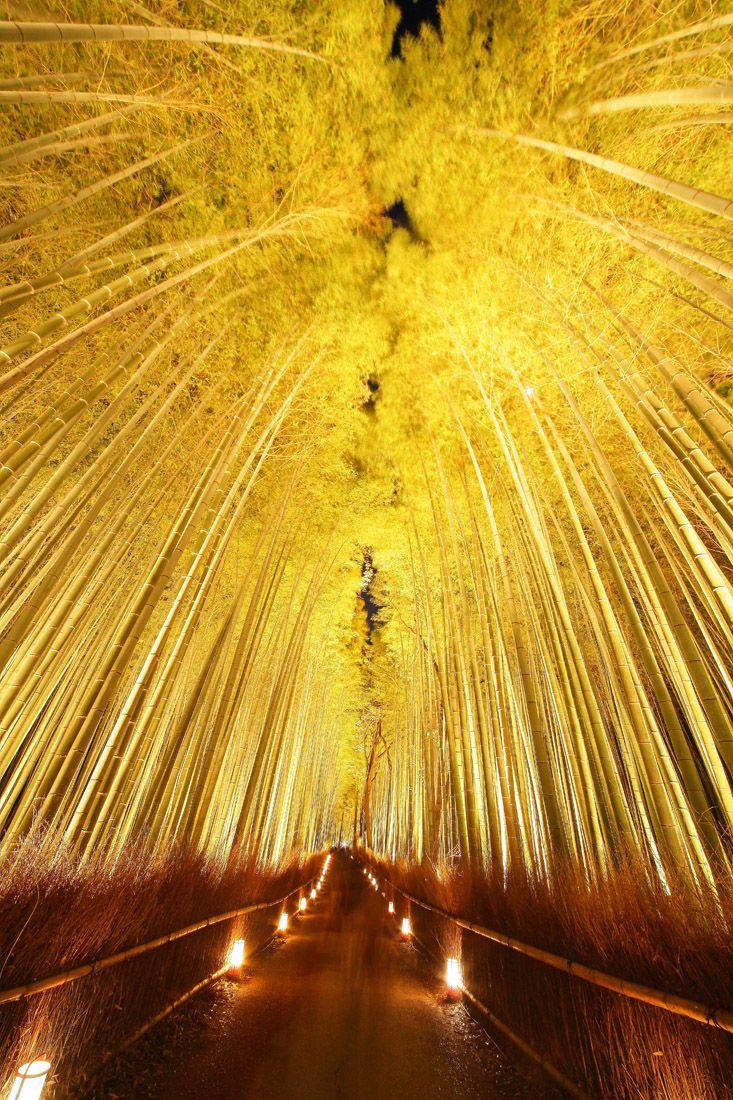 京都、嵐山花灯路(竹の径ライトアップ)