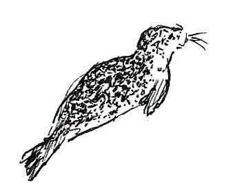 Smaller Harbor Seal by Delude on DeviantArt