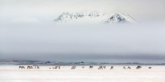 Az év legszebb természetfotói, csodálatosak, nézzétek meg ti is.