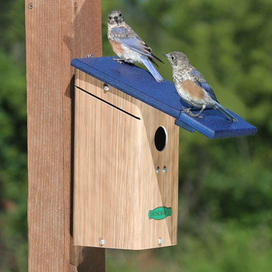 86 best jacks bluebirds images on pinterest birdhouses for Different bird houses