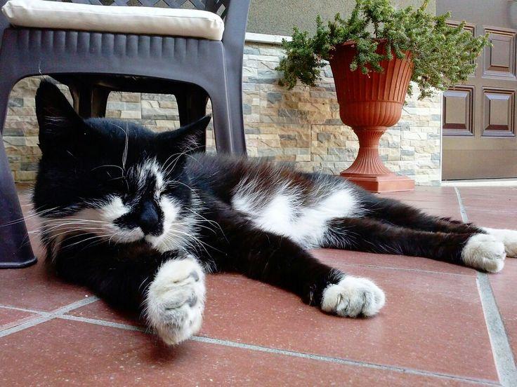 #sleepingcat