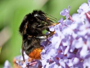 Where do bees go in winter? And other wildlife to record in winter