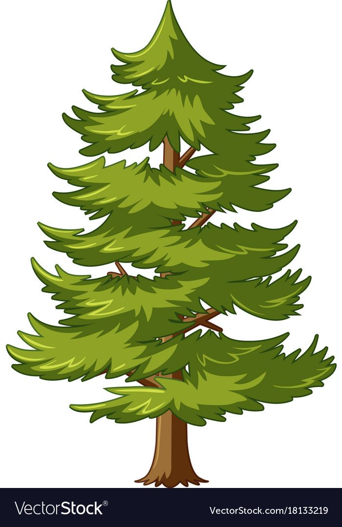 Pine Tree With Green Leaves Vector Image On Vectorstock Leaves Illustration Tree Illustration Tree Art