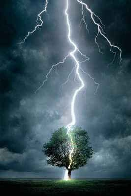#Tree #Attracted #Lighting #Thunder #Landscape #Nature