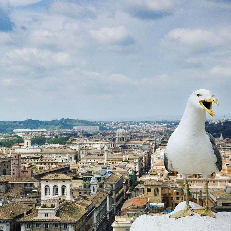 Panorama di Roma dall'alto della terrazza del Vittoriano. In primo piano un gabbiano amante dei selfie... #seagull #romaIT #rome #archaeology #romelovers #italiainunoscatto #italia #best_italiansites #cityscape #beniculturali30 #culturalheritage30 #picoftheday #instaart #instagram #instagood #yallersitalia #volgoitalia #volgoarte #sky #instalike #ancientart #Vittoriano #blue #natgeotravelpic #history #ancient #my_rome #igersroma #ig_rome #cloud