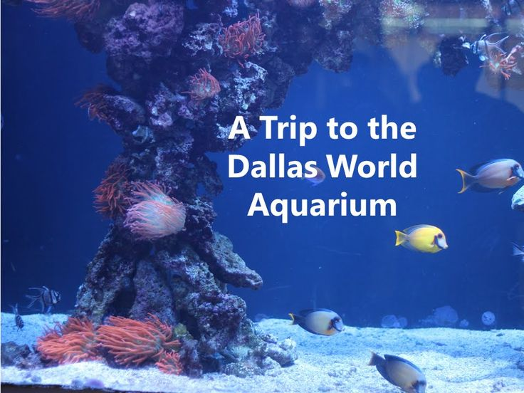 We took a trip to the Dallas World Aquarium & wanted to share it. Support your local zoos, aquariums, conservation centers & science ed.