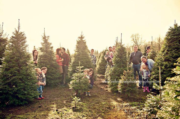 Christmas Tree Farm  Large family session