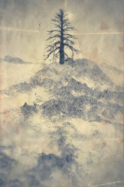 White Trees by Chaotic.Atmospheres , via Behance