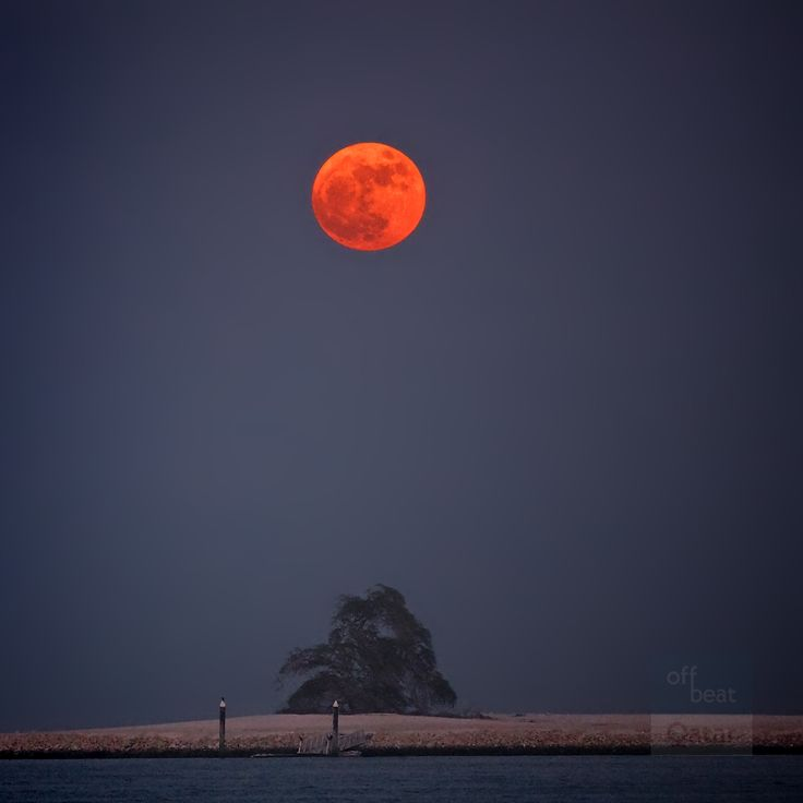 Who missed the frenzy about the #supermoon ? We want to share our picture of the rising moon above One Tree Island in the #bay of #doha along the #corniche. The dust in the air made the moon appear deep #orange.  #iloveqtr #qatartourism #visitqatar #doha #qatar #desert #travel #traveler #photography #moon #quote