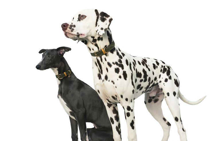 Rolf & Lazarus Kastellet Collar in Olive. https://www.rolfandlazarus.com/dog-collars/dog-collar-kastellet-olive