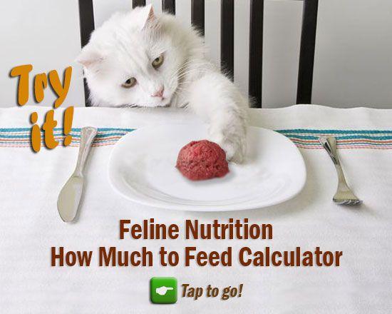Best 25 Cat Food Recipes Ideas On Pinterest Healthy Cat