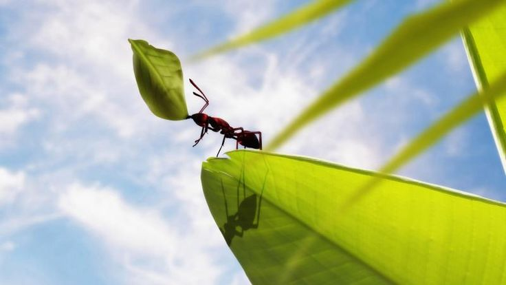 Powerful Ant