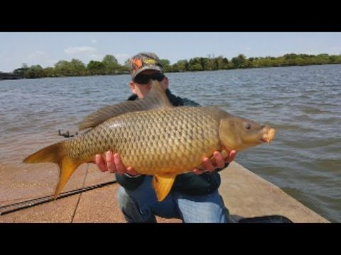 25 best ideas about carp fishing videos on pinterest for Fishing with chicken liver