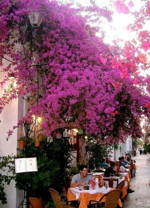 ~Bougainvillea covered alley in Nafpflio, Peloponnese~ Greece
