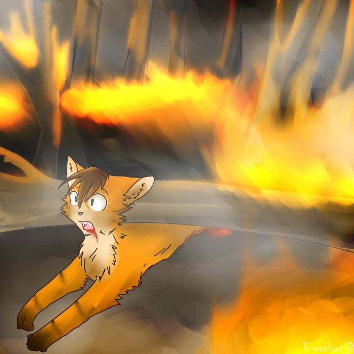 Warriors Erin Hunter Lost Stars: 1000+ Images About Warrior Cats Are EPIC